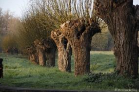 Encore les arbres
