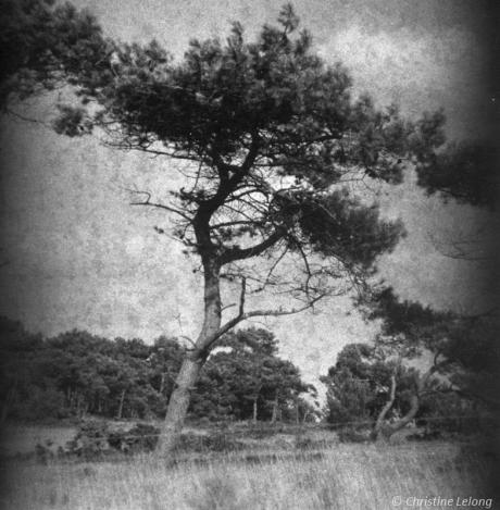 Travail autours des arbres et leur unicité
