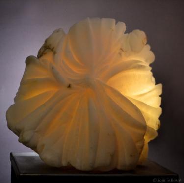 Fleur d'albatre